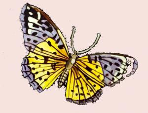 butterfly music artwork