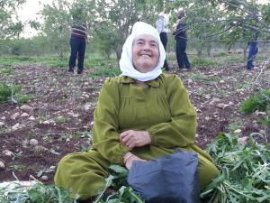 Harvest time in Jenin