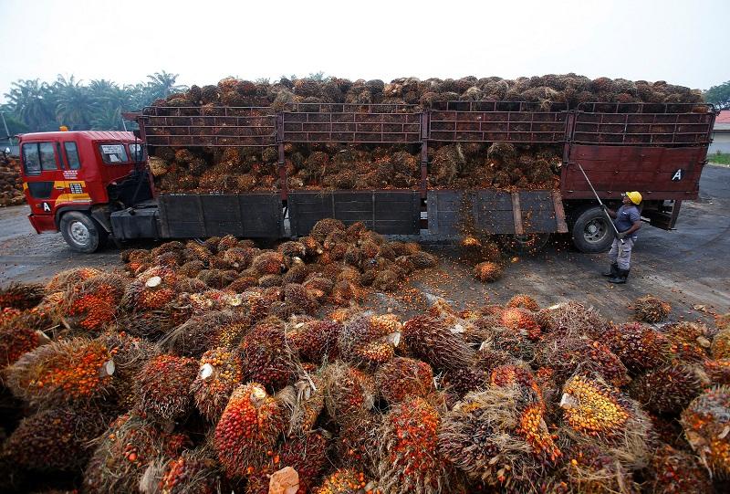 Global Palm Oil Market Forecast 2021