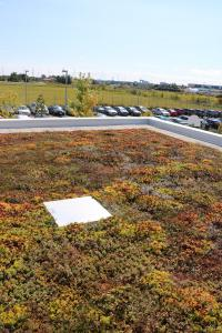 Visual of low sloped vegetated roof in dormancy.