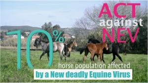 NEV is a horse equivalent of HIV and is becoming an increasingly serious threat to at least 10 percent of the global horse population.To counter this emerging threat, Equigerminal Team has launched a crowdfunding campaign to raise funds.