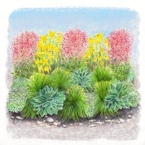 flowers, foliage, shade, garden, high, country, gardens